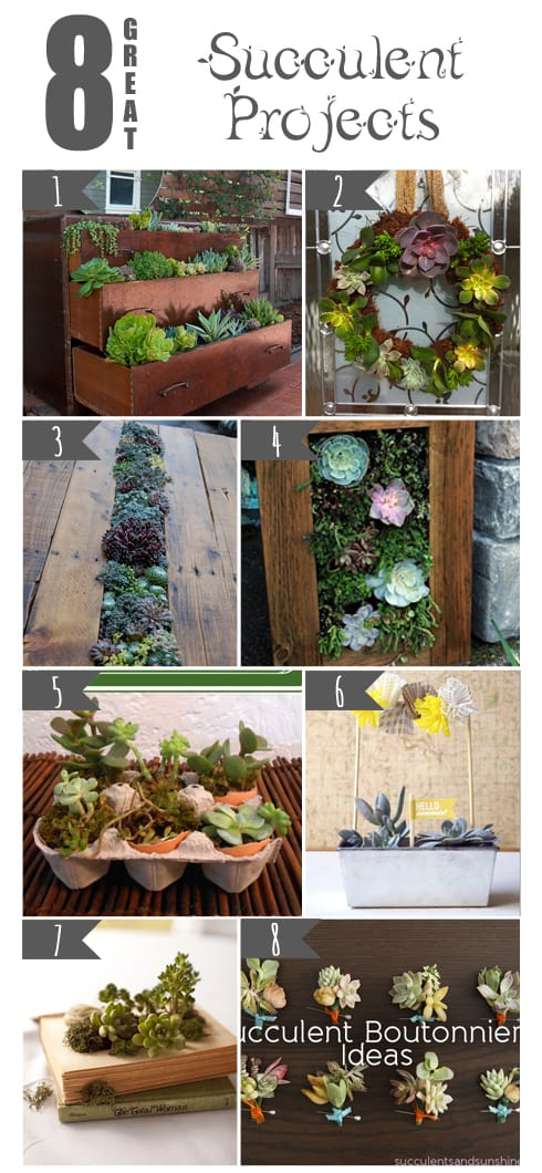 8 Great Succulent Projects