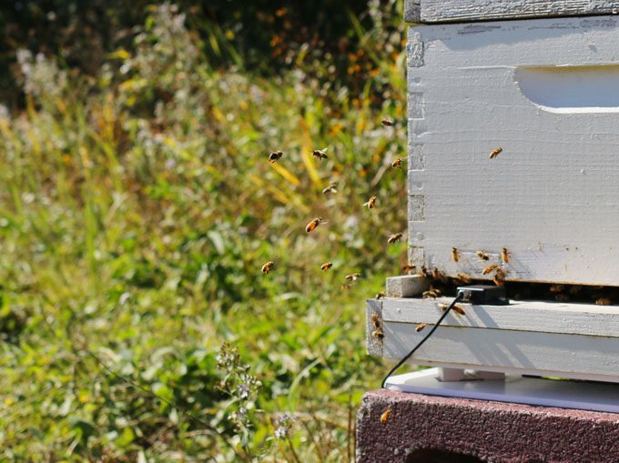 Join me and Feed a Bee by working together to help bees thrive! Learn ways that you can help bees flourish! | www.honeyandbirch.com Sponsored Pin