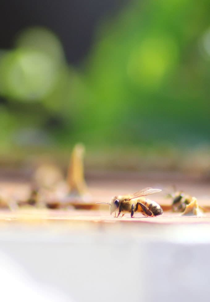 National Honey Bee Day - Best Honey Recipes
